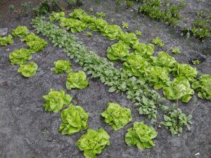 natural kitchen garden