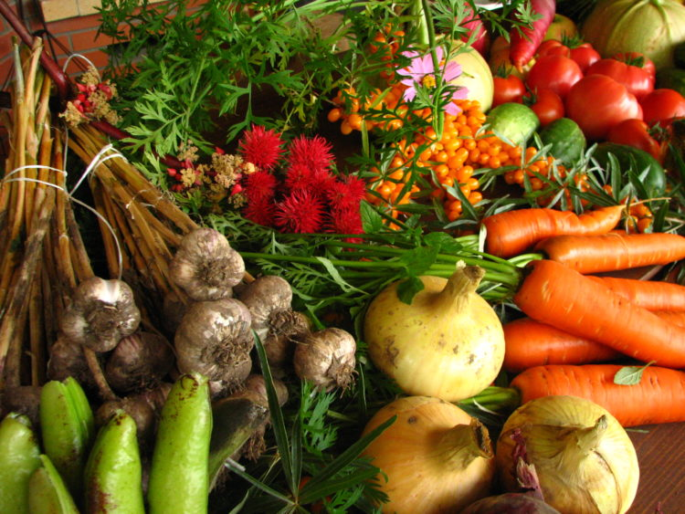 Ecologically_grown_vegetables (1)