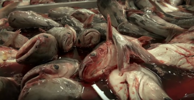 Image: Fillet Oh Fish Documentary