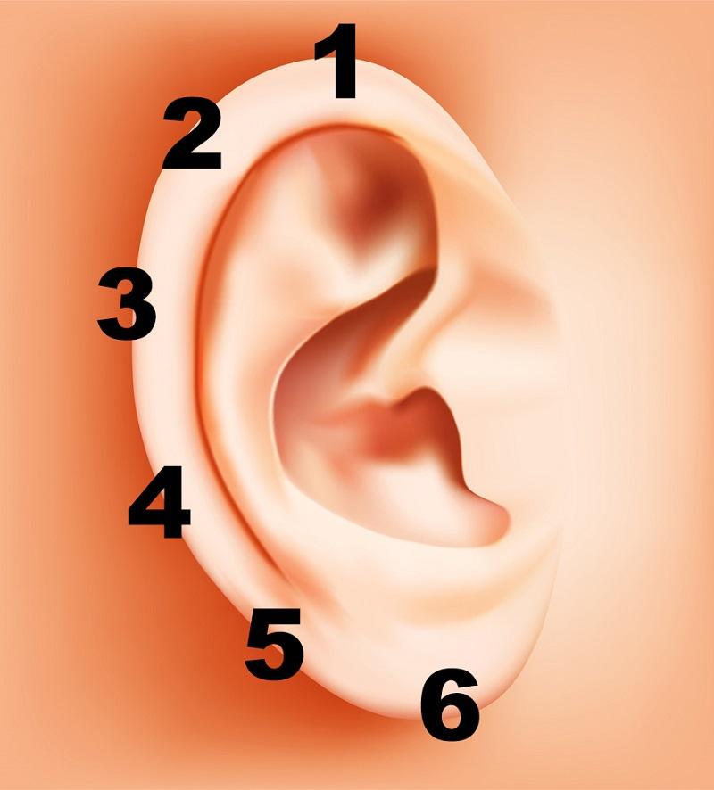 ear diagram