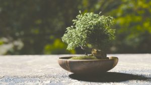 Grow bonsai trees for profit as your specialty crop.