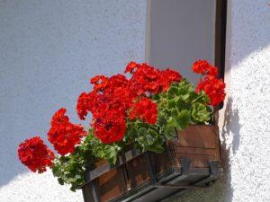 window flower bed
